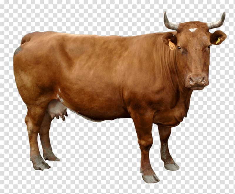 Oxen bull clipart png transparent graphic black and white Brown cow, Holstein Friesian cattle , Brown Cow transparent ... graphic black and white