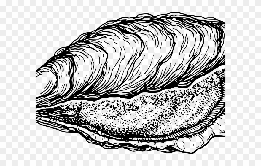 Oystdr clipart banner black and white stock Clams Clipart Oyster - Free Oyster Clipart - Png Download ... banner black and white stock