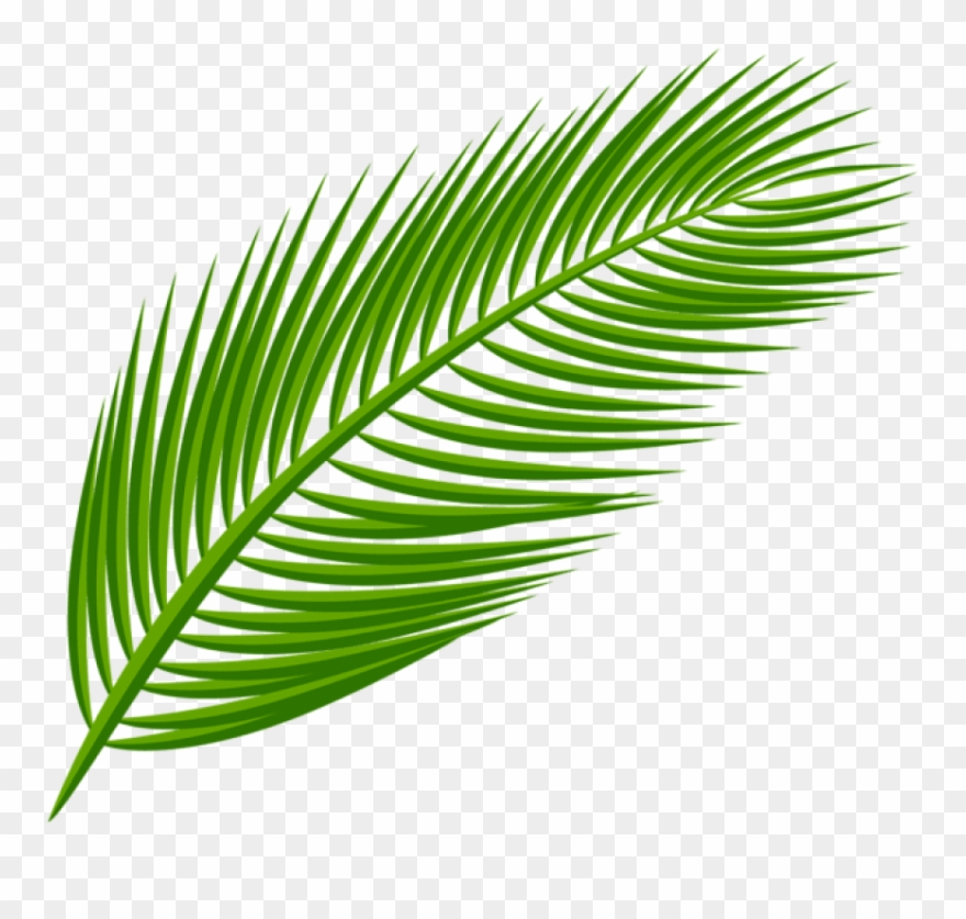 Palm fronds clipart png clip library library Download Palm Leaf Transparent Clipart Png Photo (#2319003 ... clip library library