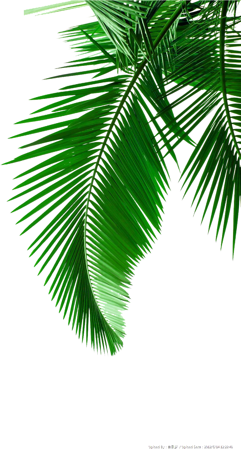 Palm fronds clipart png png free download HD Picture Leaf Leaves Material Arecaceae Palm Green Clipart ... png free download