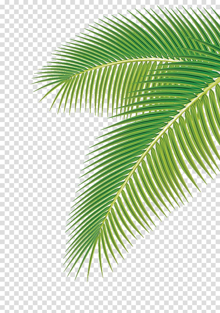 Palm fronds clipart png image free download Arecaceae Leaf Euclidean , Palm leaf, green palm leaf ... image free download
