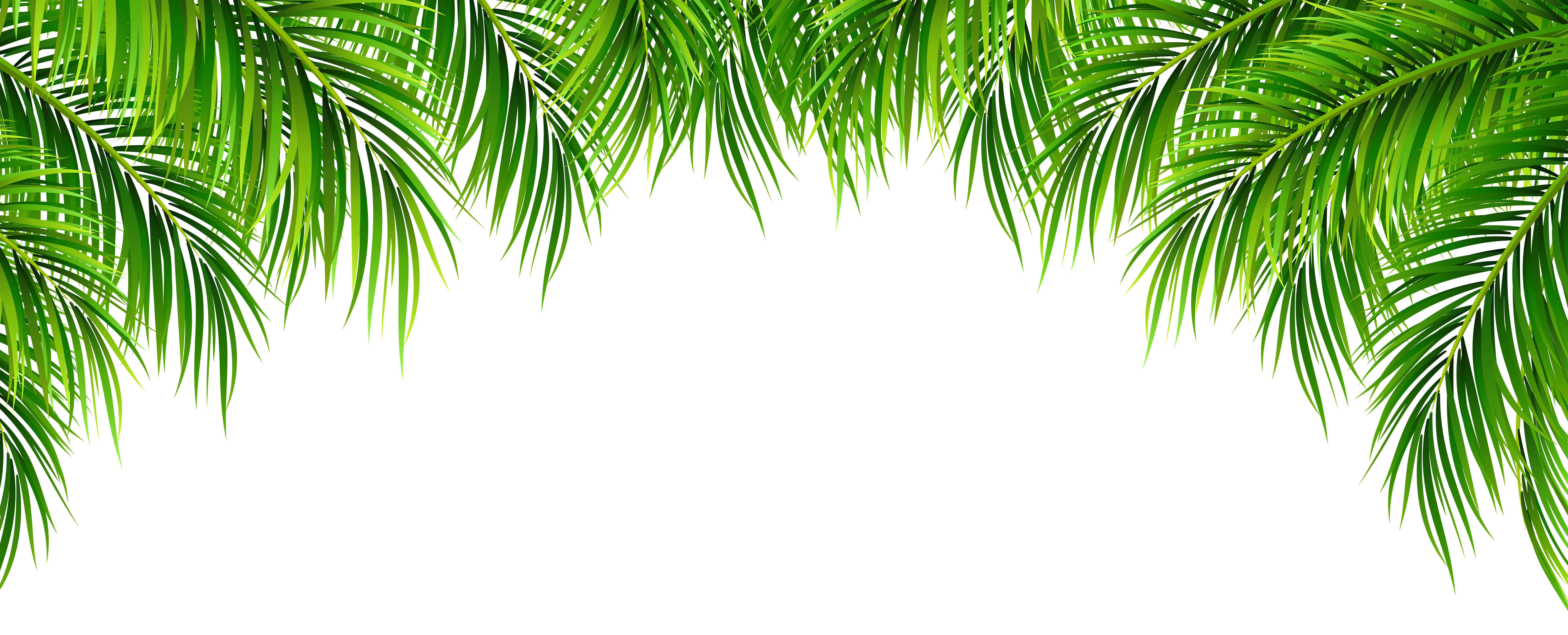 Palm leaf border clipart image black and white Pin by Bassey Ekpenyong on LEAVES in 2019 | Leaves, Clip art ... image black and white