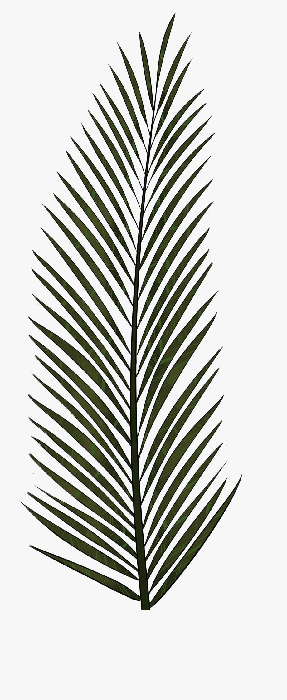 Palm leaves with pineapple clipart black and white picture black and white download Palm Leaf Png Textures And Style Radin Mas - Palm Tree Leaf ... picture black and white download