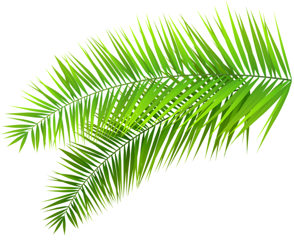 Palm print clipart banner free download Pin by Shwe Myint on PNG Pictures | Palm frond art, Leaf ... banner free download