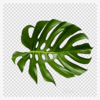 Palm print clipart picture free Palm Leaf PNG, Transparent Palm Leaf PNG Image Free Download ... picture free