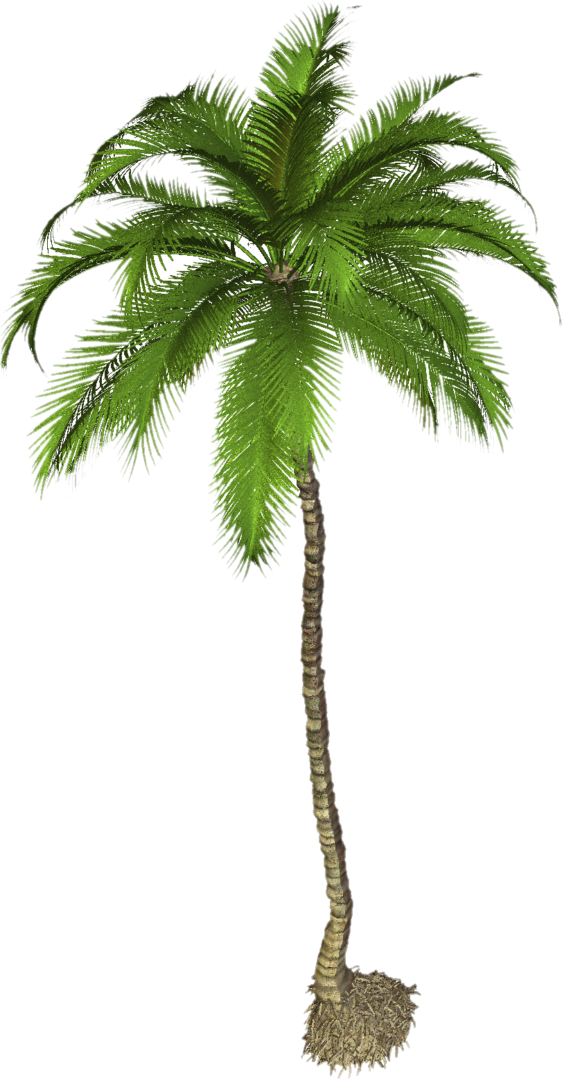 Palm tree background clipart vector black and white library Free Images Clipart Best Palm Tree #31892 - Free Icons and PNG ... vector black and white library