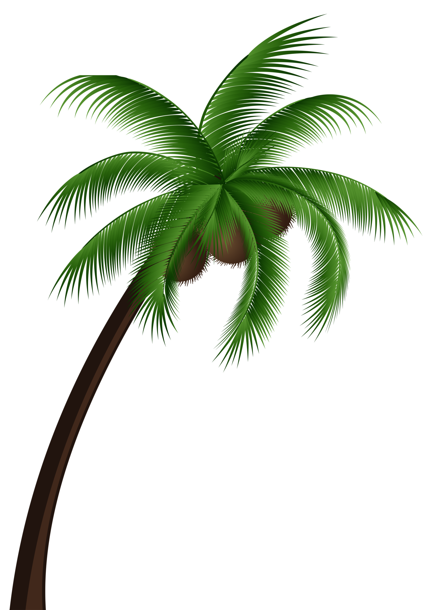 Palm tree clipart png library download Coconut Palm Tree PNG Clip Art png library download