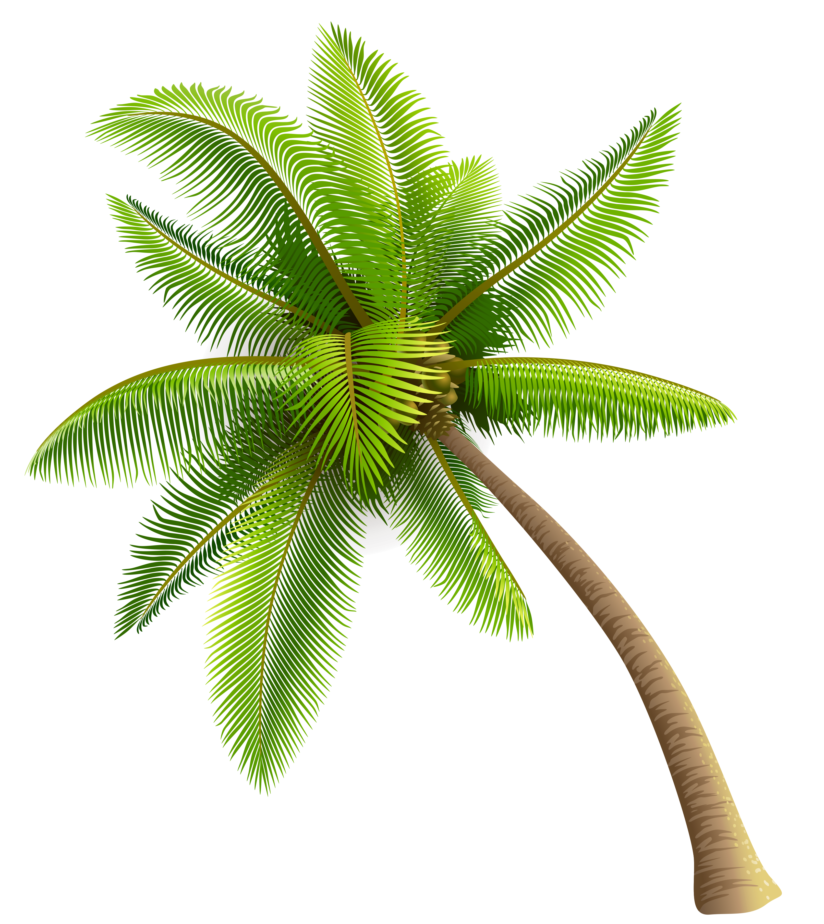 Palm tree clipart free banner library library Green Palm Tree PNG Clipart | Gallery Yopriceville - High-Quality ... banner library library