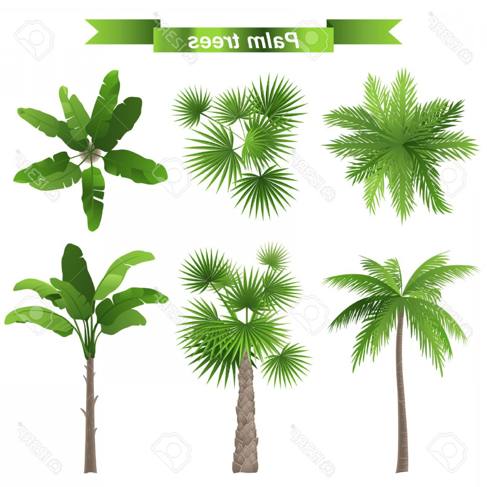 Palm tree plan clipart clip black and white download Photo Different Palm Trees Top And Front View | SOIDERGI clip black and white download
