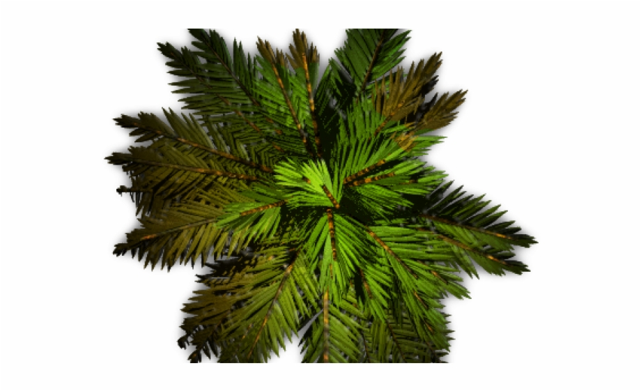 Palm tree plan clipart graphic library stock Tree Plan Png Palm Free PNG Images & Clipart Download ... graphic library stock