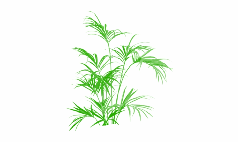 Palm tree clipart plan image library Tree Clipart Png Plan - Palm Trees - tree plan png, Free PNG ... image library