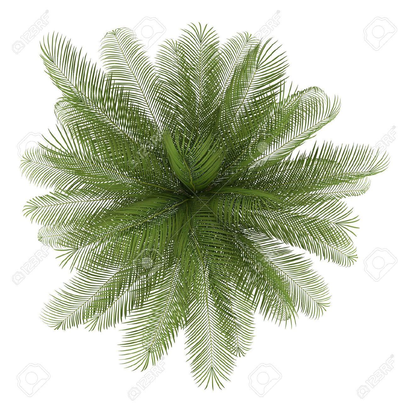 Palm tree plan clipart clipart stock Bilderesultat for vector california palm trees plan | Trees ... clipart stock