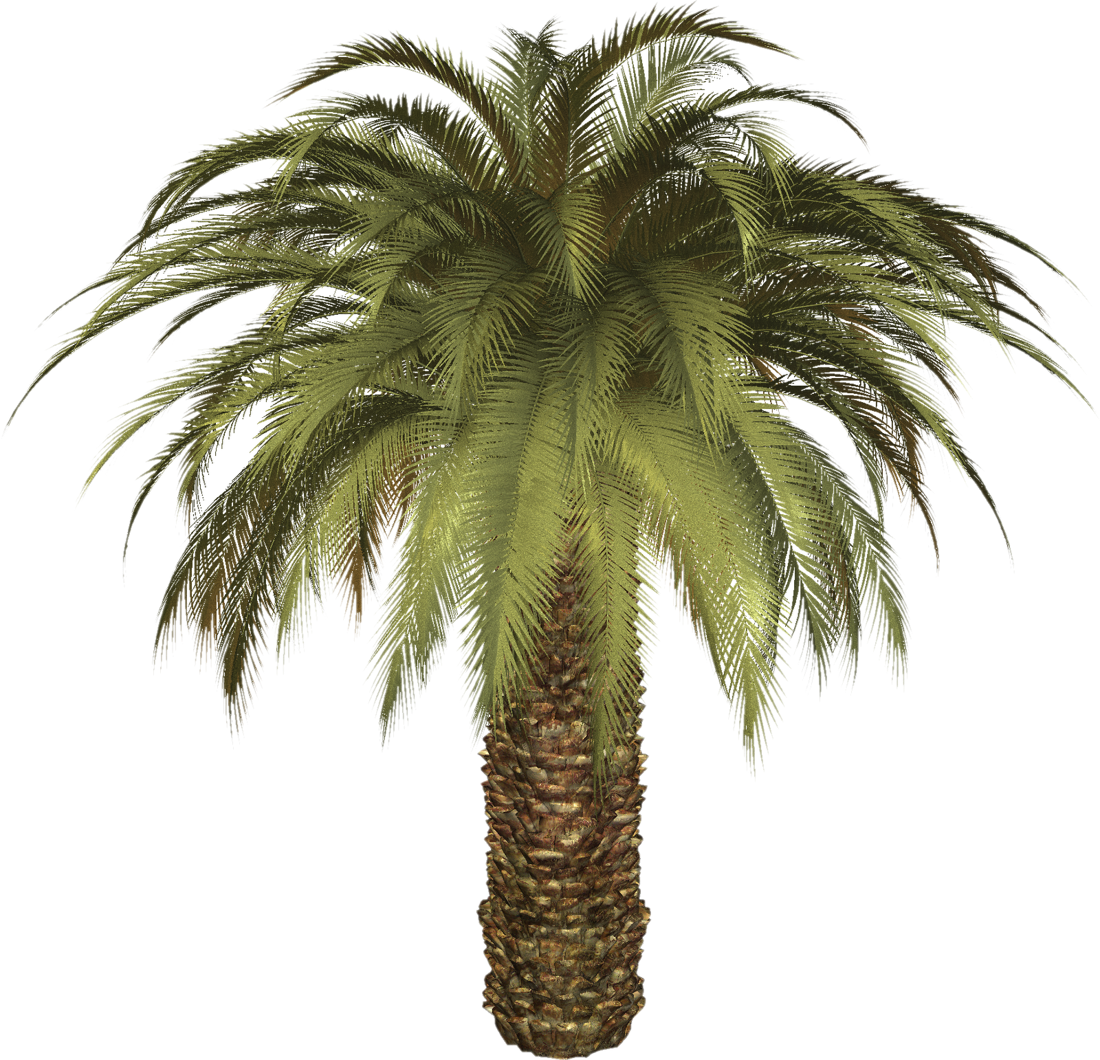 Palm tree clipart png clip freeuse stock Palm tree PNG images, download free pictures clip freeuse stock