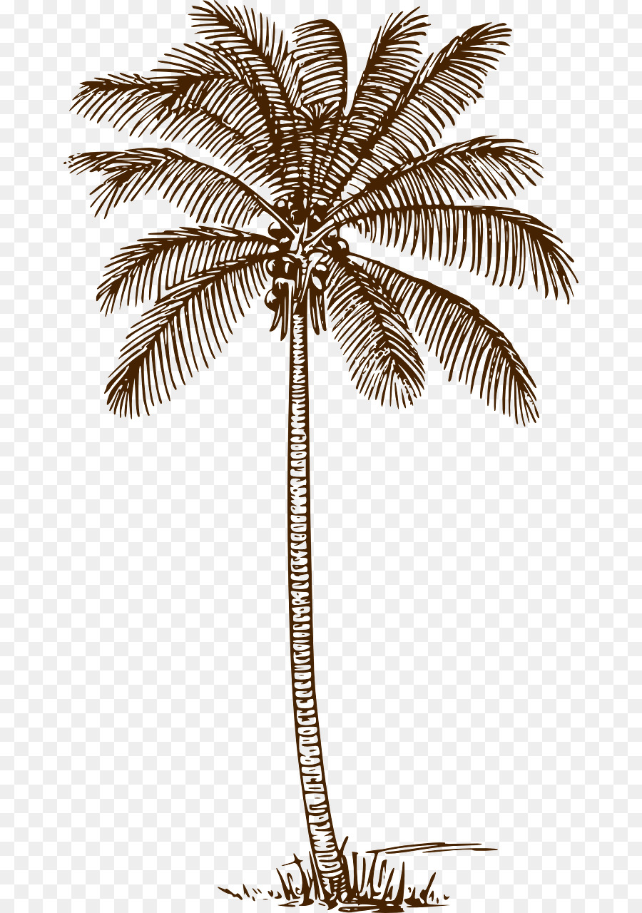 Palm tree drawing clipart jpg freeuse stock Coconut Tree Drawing clipart - Drawing, Coconut, Tree ... jpg freeuse stock