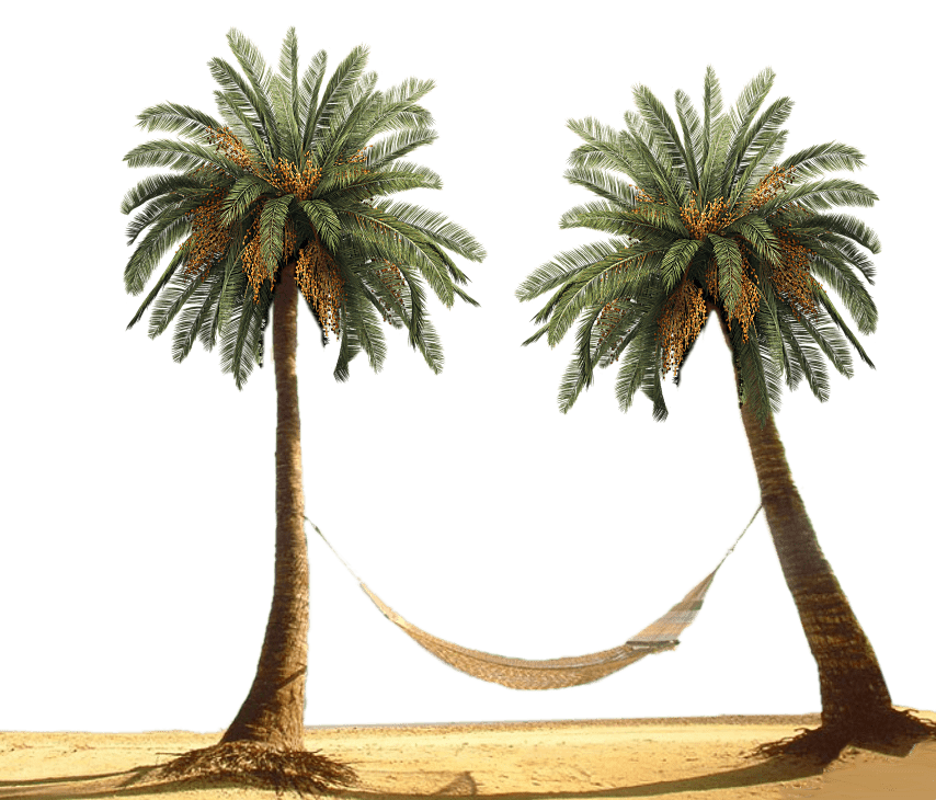 Palm tree with hammock clipart royalty free stock Hammock Between Palm Trees transparent PNG - StickPNG royalty free stock