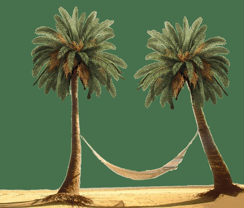 Palm tree hammock clipart clip transparent library Hammock Between Palm Trees transparent PNG - StickPNG clip transparent library