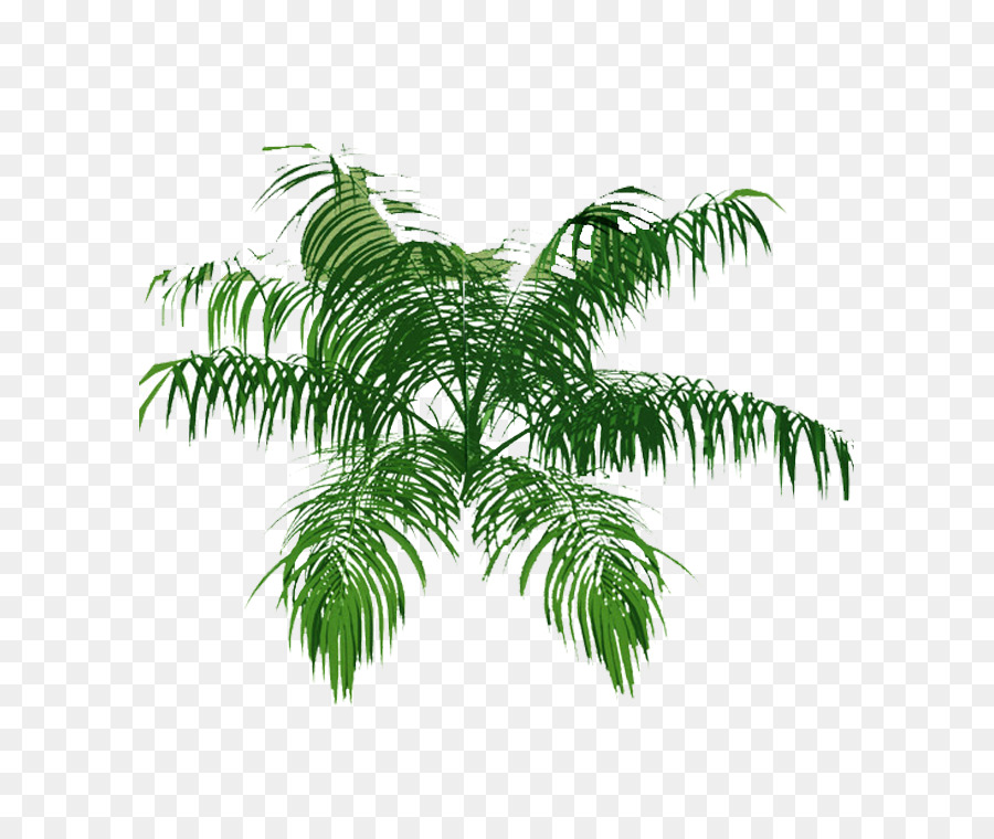 Palm tree plan clipart svg stock Palm Tree Drawing clipart - Tree, Leaf, Grass, transparent ... svg stock