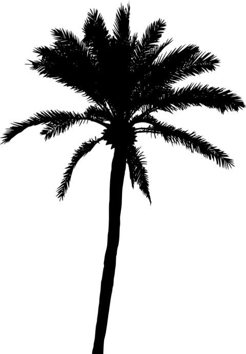 Palm tree silhouette clipart svg freeuse library Palm Tree Silhouette png - Free PNG Images | TOPpng svg freeuse library