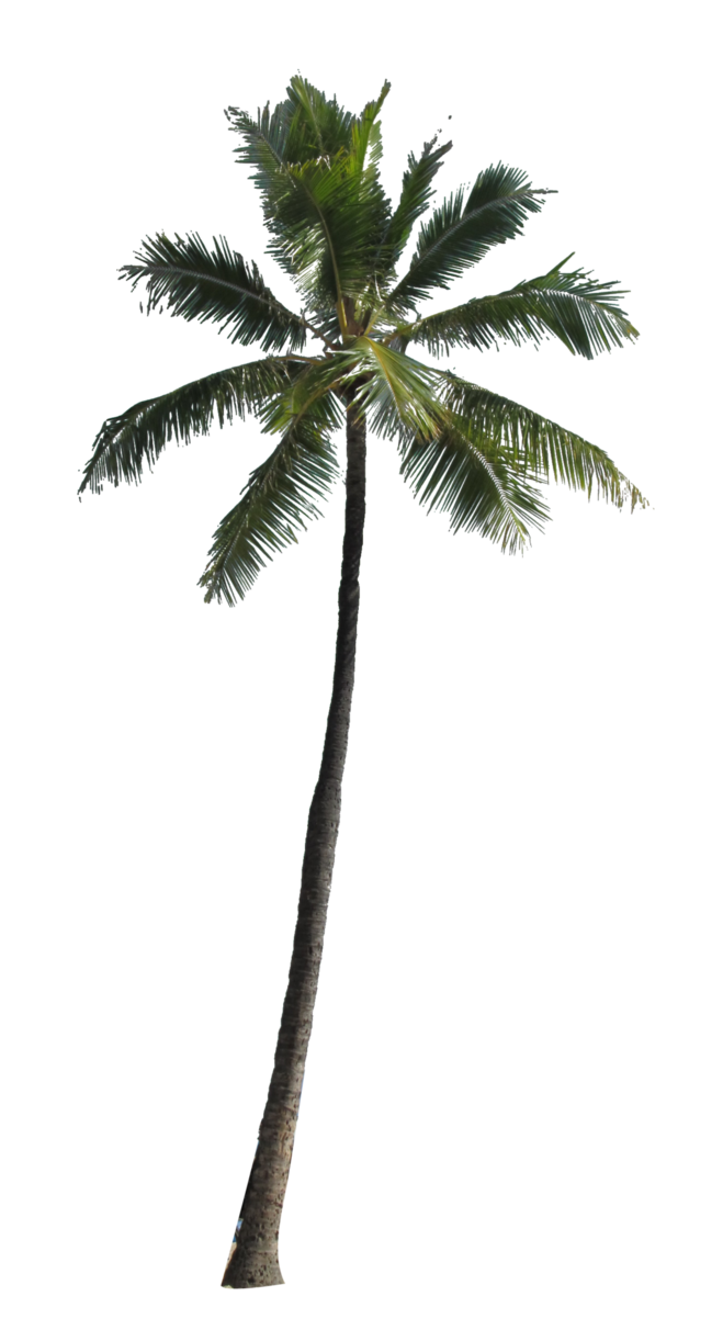 Palm tree silhouette clipart no background clipart free download Image result for palm trees png | ibiza backgrounds to try ... clipart free download