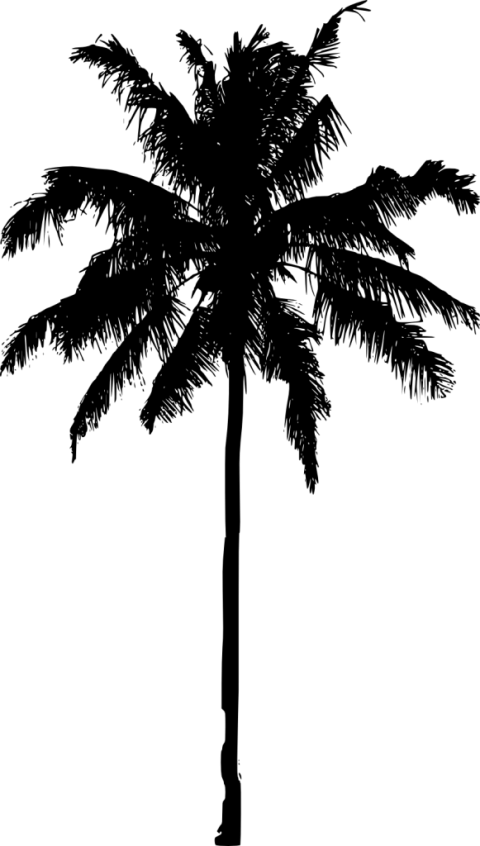 Palm tree silhouette clipart no background clip black and white download Palm Tree Silhouette png - Free PNG Images | TOPpng clip black and white download