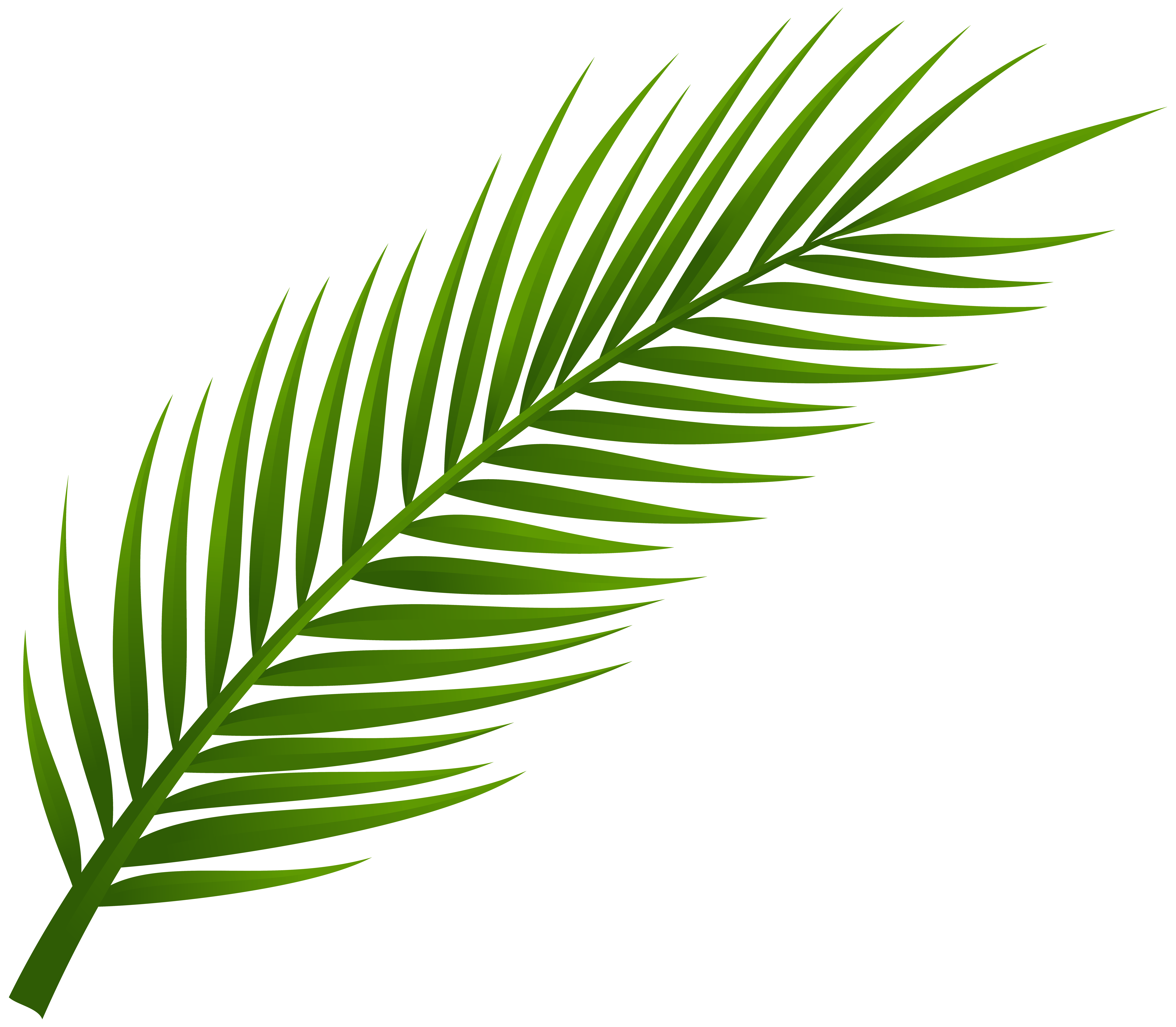 Palmetto tree and moon clipart png royalty free download Palm_Tree_Leaf_PNG_Clip_Art-1974.png (8000×6983) | Tatts | Pinterest ... png royalty free download