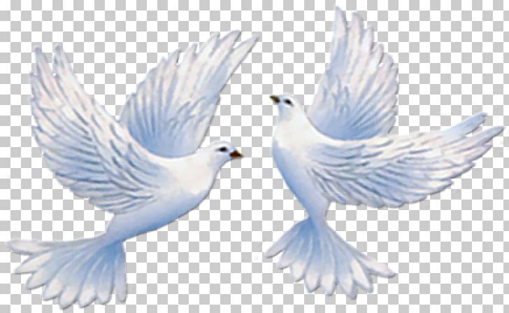 Palomas de boda clipart clip art free Palomas típicas de la invitación de la boda Paloma mensajera ... clip art free