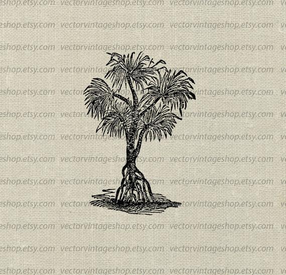Pandanus clipart clip art free Screwpine Tree Clipart, Vector Clip Art, Pandanus Tropical ... clip art free