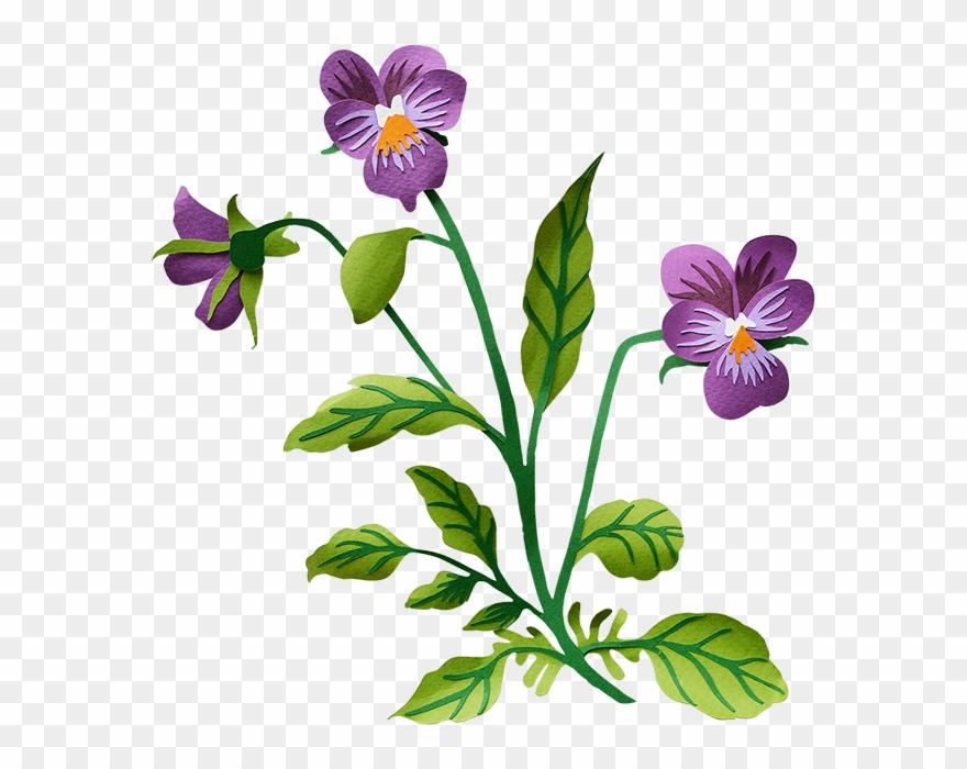Pansy pictures clipart vector library library Pansy - Pansy Transparent Background Clipart (#848372 ... vector library library