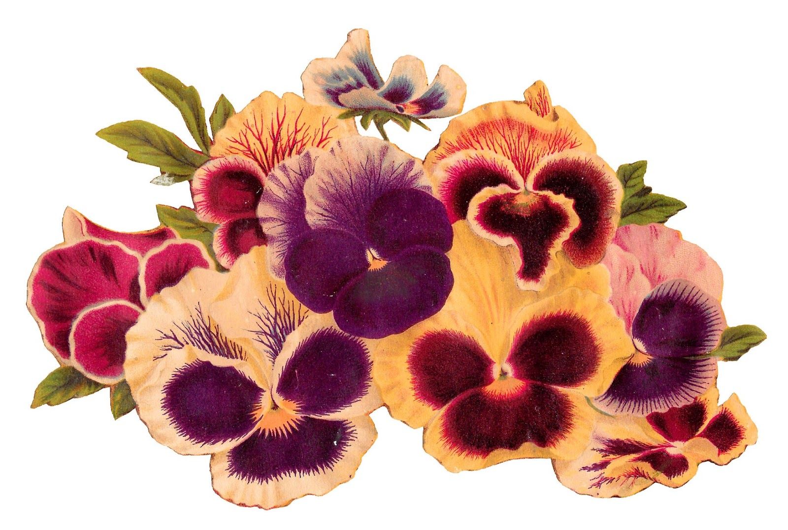 Pansies clipart free clip library Antique Images: Royalty Free Pansy Clip Art Image Download ... clip library