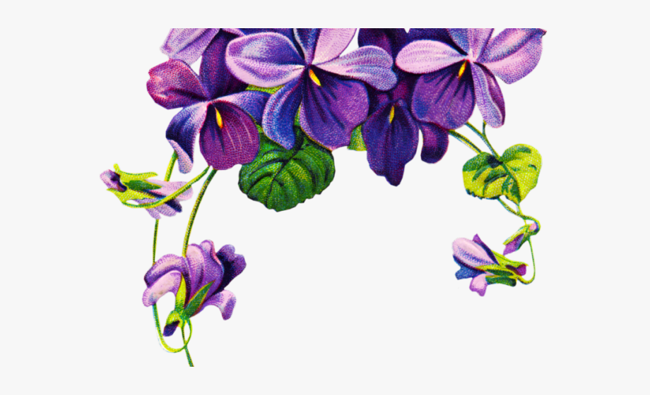 Pansy border clipart banner freeuse Pansy Clipart Violet Rose - Purple Flower Borders Png ... banner freeuse