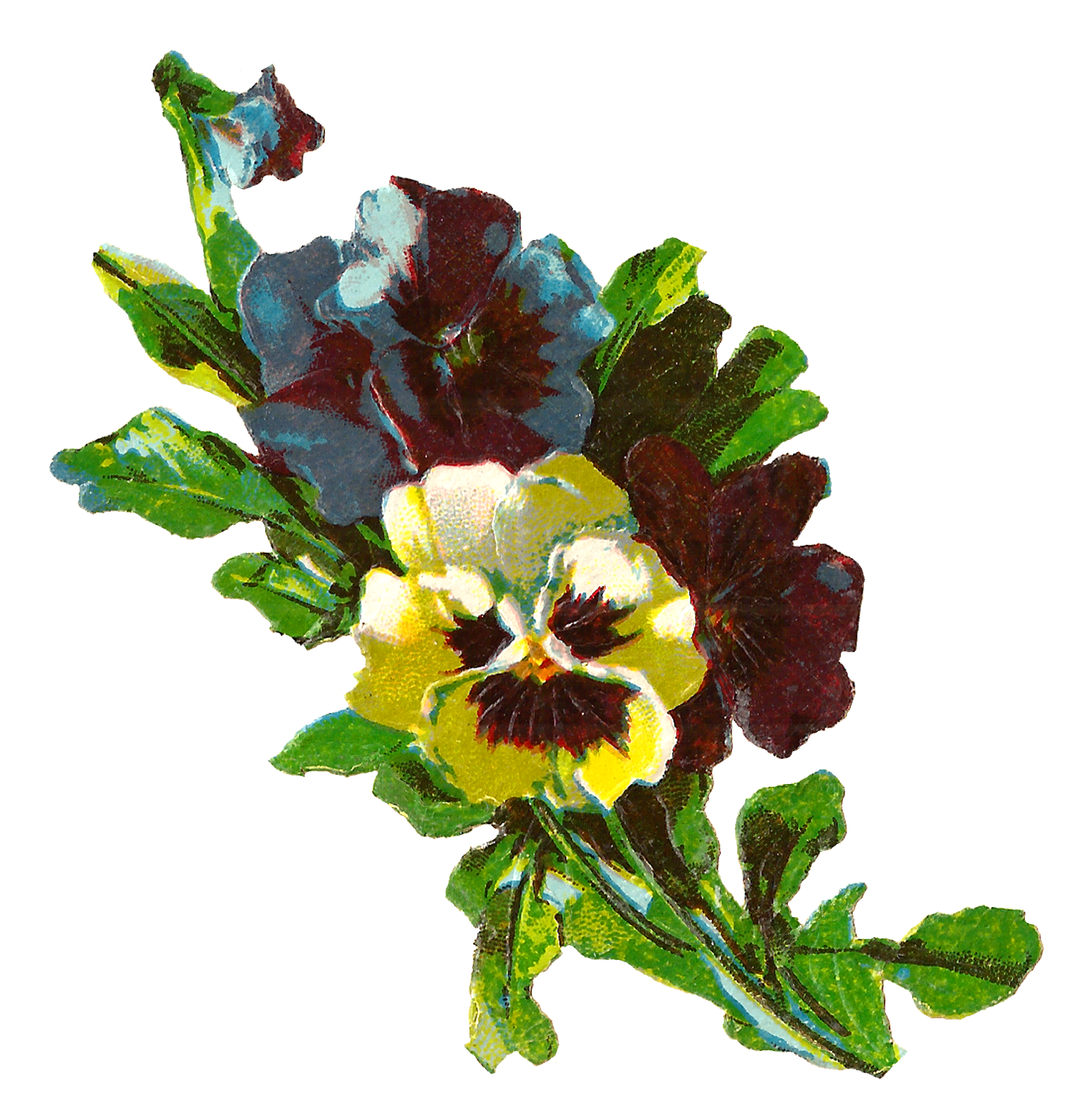 Pansy flower clipart vector transparent library Antique Images: Pansy Flower Artwork Image Illustration Botanical ... vector transparent library