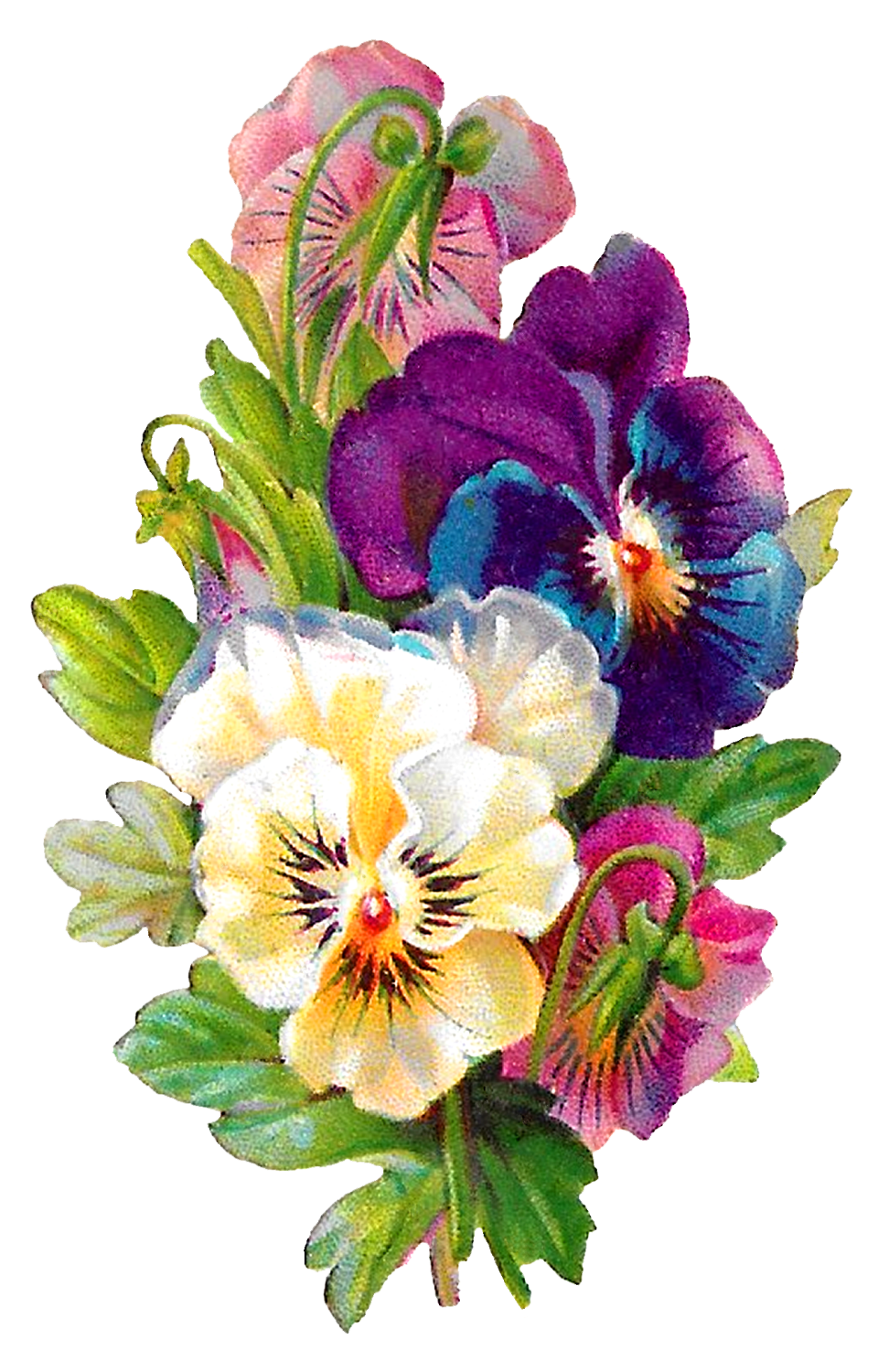Pansy flower clipart banner royalty free library Antique Images: Wildflower Art Pansy Flower Clipart Antique ... banner royalty free library