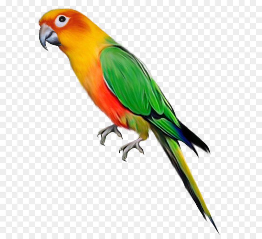 Parrot clipart png freeuse Papagei Vogel clipart - Großes Papagei-Clipart png ... png freeuse