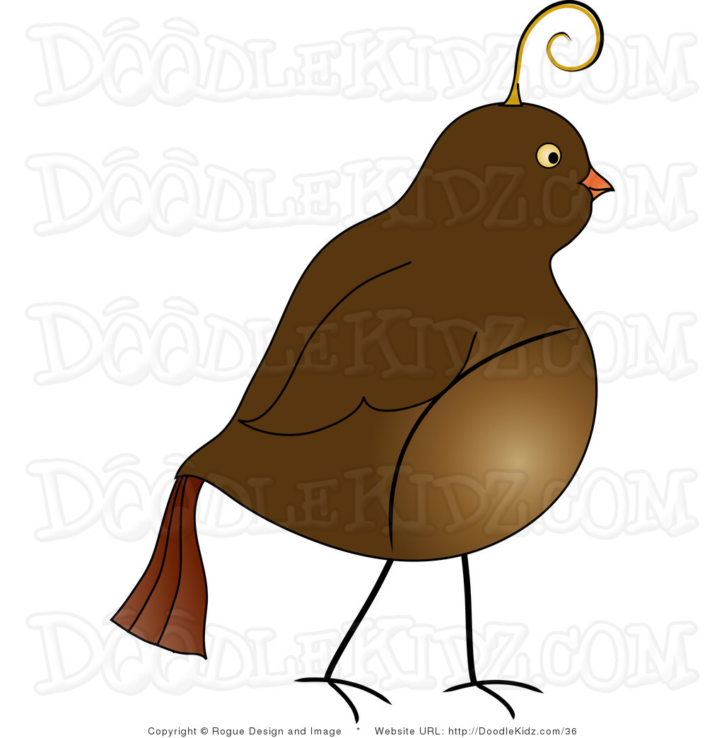 Partridge clipart clipart library download Partridge Clipart Free   Clipart Panda - Free Clipart Images clipart library download