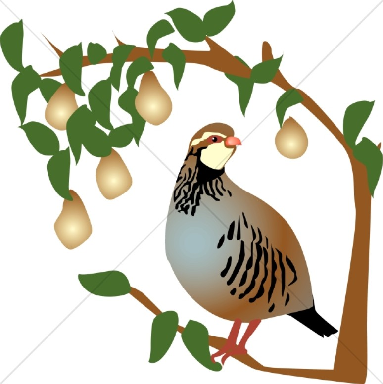 Partridge clipart clipart freeuse Partridge in a Pear Tree Clipart   Religious Christmas Clipart clipart freeuse