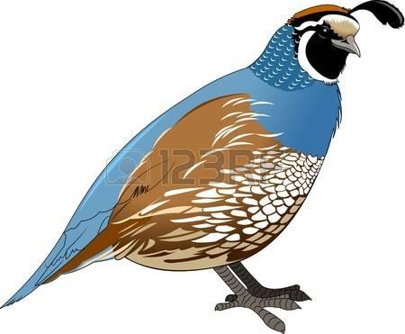 Partridge clipart clipart royalty free stock 95318403 Stock Vector Beautiful Funny Cartoon Quail Bird Of ... clipart royalty free stock
