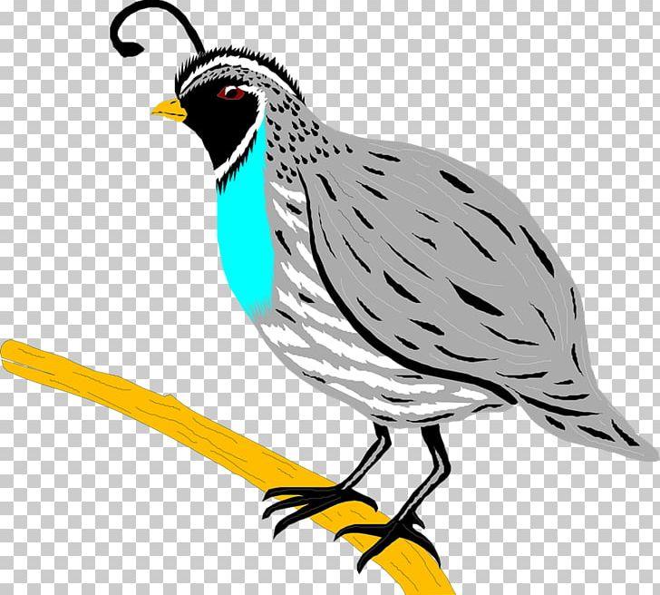 Partridge clipart clip transparent Quail Bird Partridge PNG, Clipart, Animals, Artwork, Beak ... clip transparent
