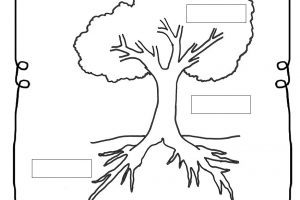 Parts of a tree clipart black and white freeuse Parts of the tree clipart black and white 3 » Clipart Portal freeuse