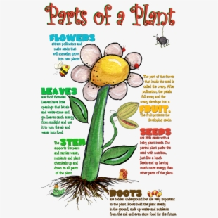 Parts of plant clipart vector freeuse stock Free Parts Of A Plant Clipart Cliparts, Silhouettes ... vector freeuse stock