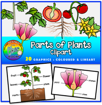 Parts of plant clipart graphic transparent Plants Clipart- Parts of Plants | Garden Teaching Unit ... graphic transparent