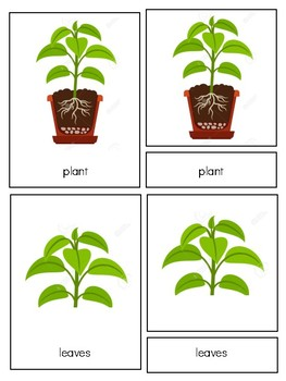 Parts of plant clipart clip library download Parts Of A Plant Clipart Worksheets & Teaching Resources | TpT clip library download