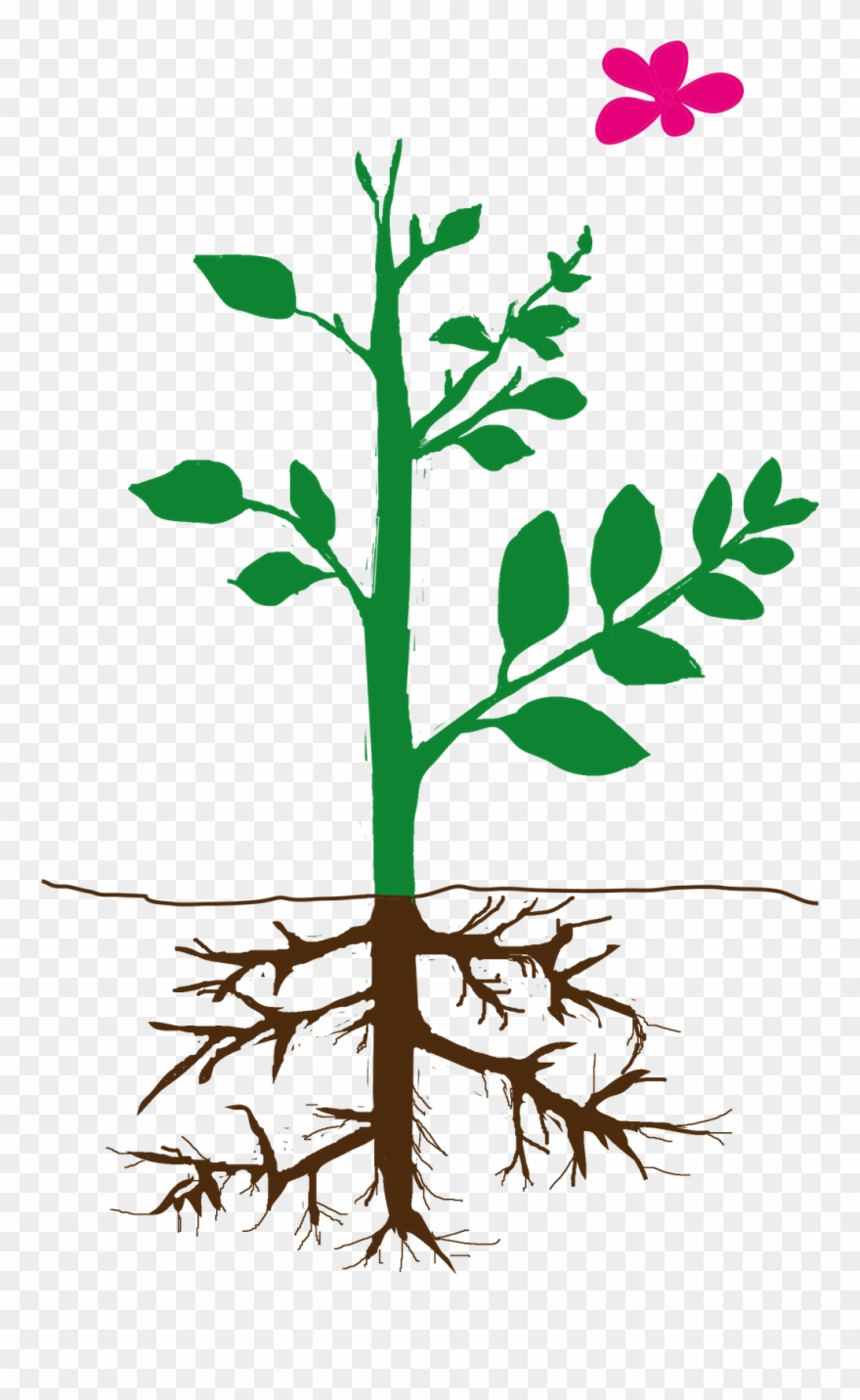 Parts of plant clipart graphic free stock Parts Of Plant Png Clipart (#2113424) - PinClipart graphic free stock