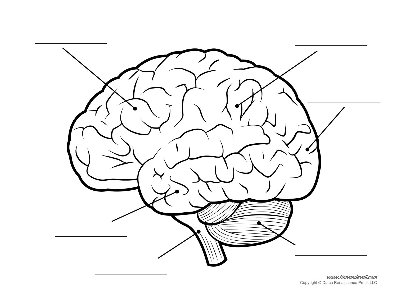 Parts of the brain clipart image royalty free library Labeled Diagram Of The Human Brain . Labeled Diagram Of The ... image royalty free library