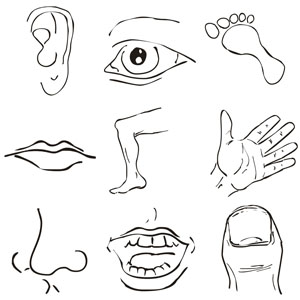 Parts of the face fill in free clipart svg freeuse library 47+ Body Parts Clip Art | ClipartLook svg freeuse library