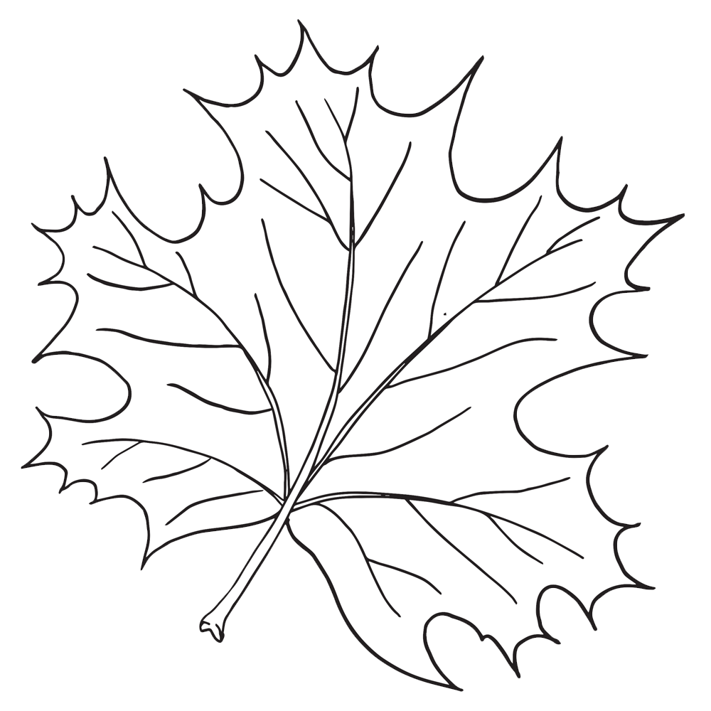 Parts of tree clipart svg library stock Parts of a Leaf - Homeschool Clipart svg library stock