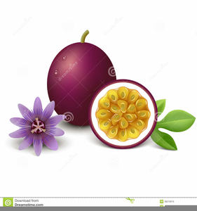 Passionfruit clipart svg free library Passion Fruit Clipart | Free Images at Clker.com - vector ... svg free library