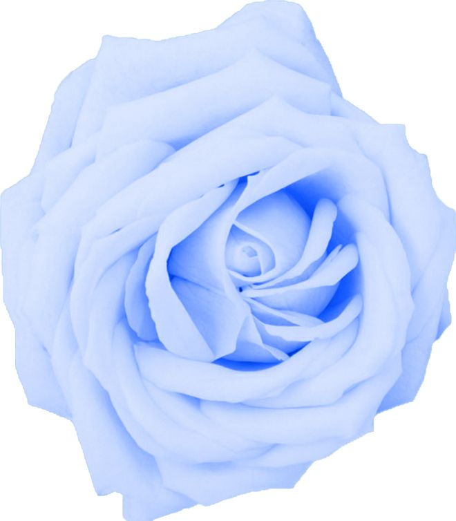 Pastel blue cliparts vector black and white library Free Blue Rose Cliparts, Download Free Clip Art, Free Clip ... vector black and white library