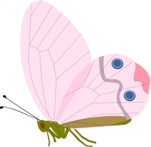 Pastel butterfly clipart free Pink and teal sideways clipart butterfly - ClipartFest free