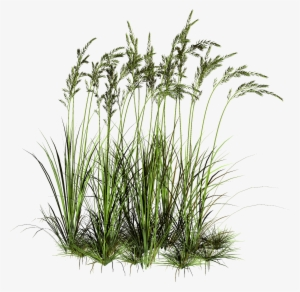 Patch of dirt in tall grass clipart vector black and white Grass PNG, Transparent Grass PNG Image Free Download - PNGkey vector black and white