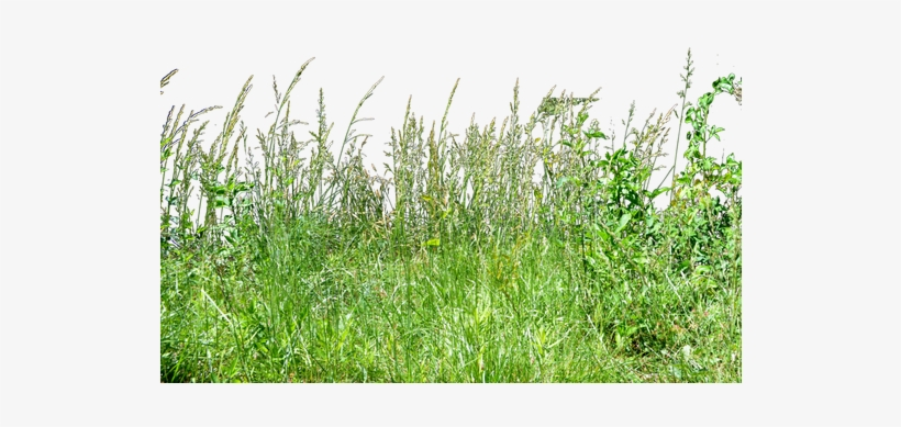 Patch of dirt in tall grass clipart clip art royalty free stock Grass PNG & Download Transparent Grass PNG Images for Free ... clip art royalty free stock